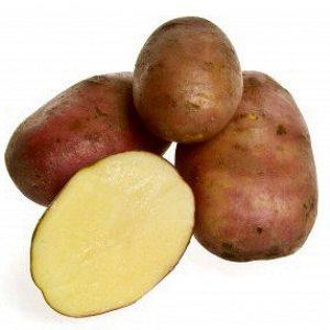 Quali patate scegliere per farle al forno