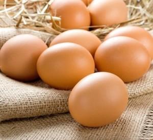 conoscere uova biologiche