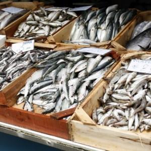 scelta pesce azzurro rischio mercurio