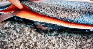 Come sfilettare il salmone: la guida completa