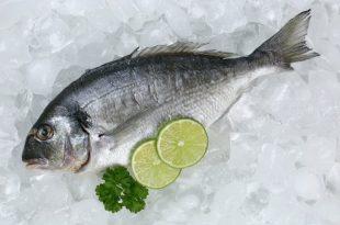 Il pesce e la sua conservazione